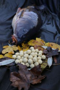 martin-sb-sweet-17-close-up-and-carp