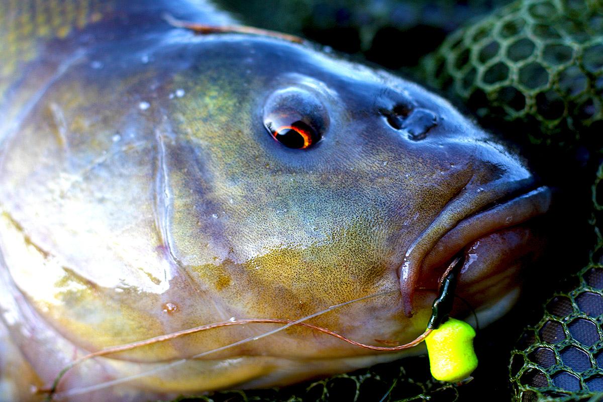 Martin SB Mini Wafters 7mm – Mixed FISH